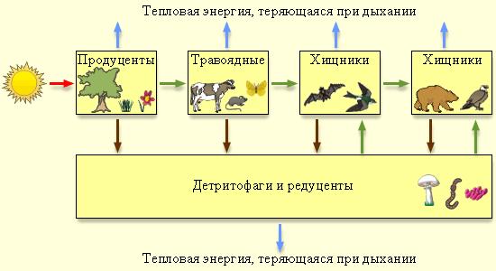 круговорота веществ в